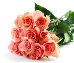 Tangerine Pink Roses